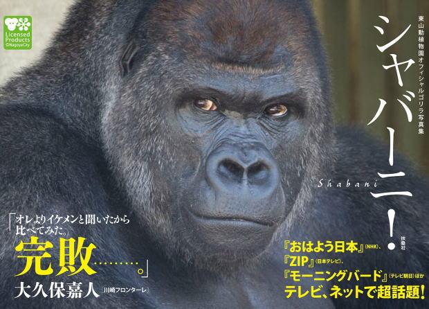 """2016年の干支は申年 噂のイケメンゴリラ""""シャバーニ!""""の写真集"""